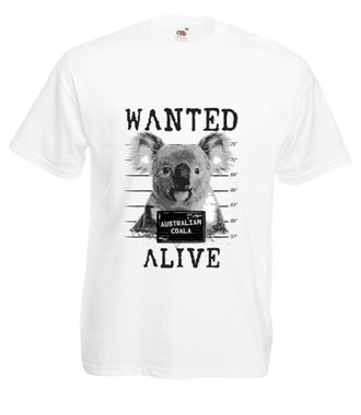 Gdzie jesteś, koalo? - Koszulka z nadrukiem - Zwierzęta - Męska
