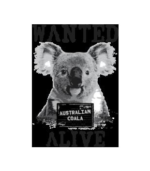 Gdzie jestes koalo grafika na bluze meska 420