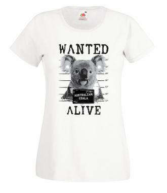 Gdzie jesteś, koalo? - Koszulka z nadrukiem - Zwierzęta - Damska