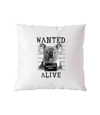 Gdzie jesteś, koalo? - Poduszka z nadrukiem - Zwierzęta - Gadżety