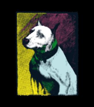 Magia psiego spojrzenia grafika na koszulke dziecieca 429