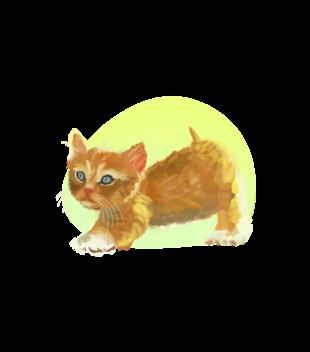Uroczy kotek grafika na koszulke dziecieca 1511