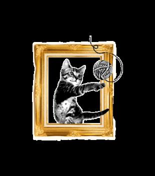 Kot w ramce vintage grafika na koszulke dziecieca 1514